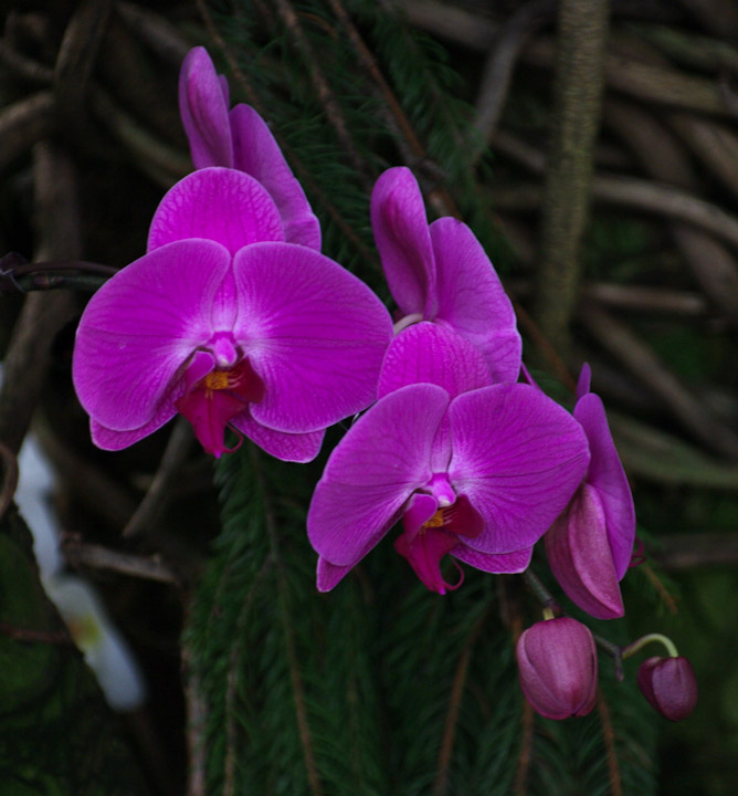 Orchid at the Boedel Floral conservatory