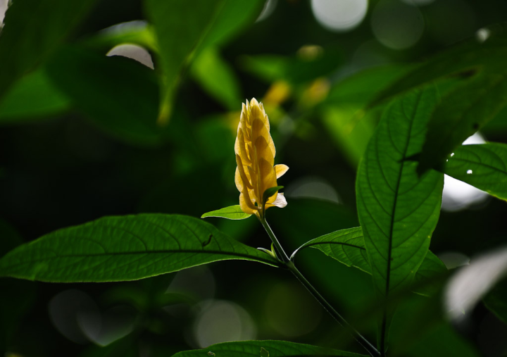 Yellow blossom at the Boedel Floral conservatory