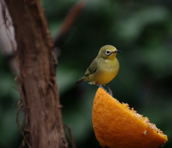 Small bird at the Boedel Floral conservatory