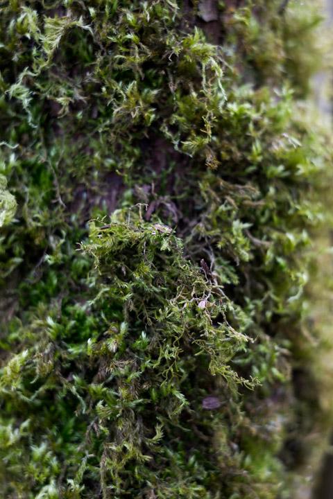 Sprint moss