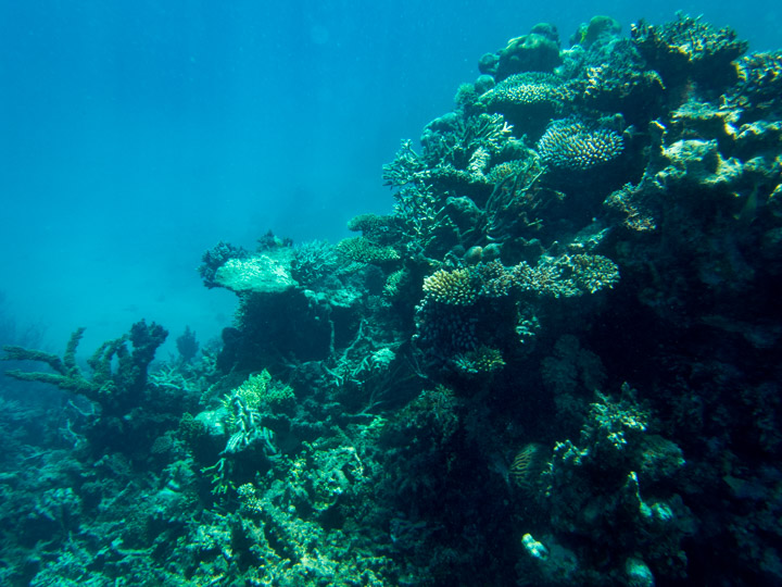 Agincourt Reef, Great Barrier Reef