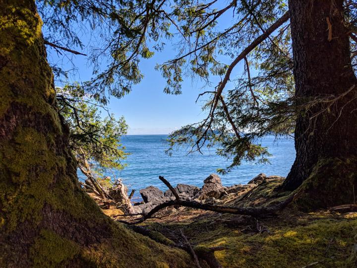 Trees and beach at Tanu