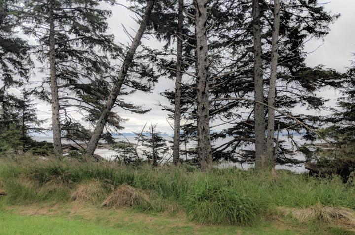 Trees behind a beach in Gwaii Haanas