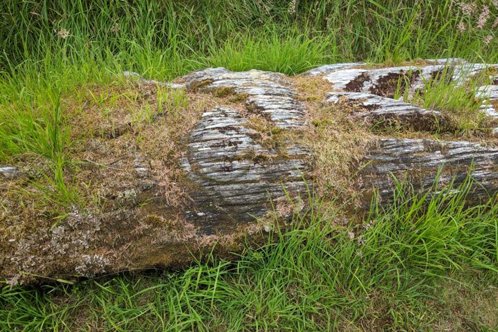 Fallen totem in Gwai Haanas