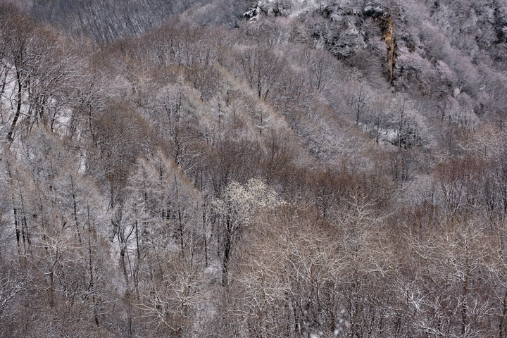 Snowy trees from Jiankou Great Wall