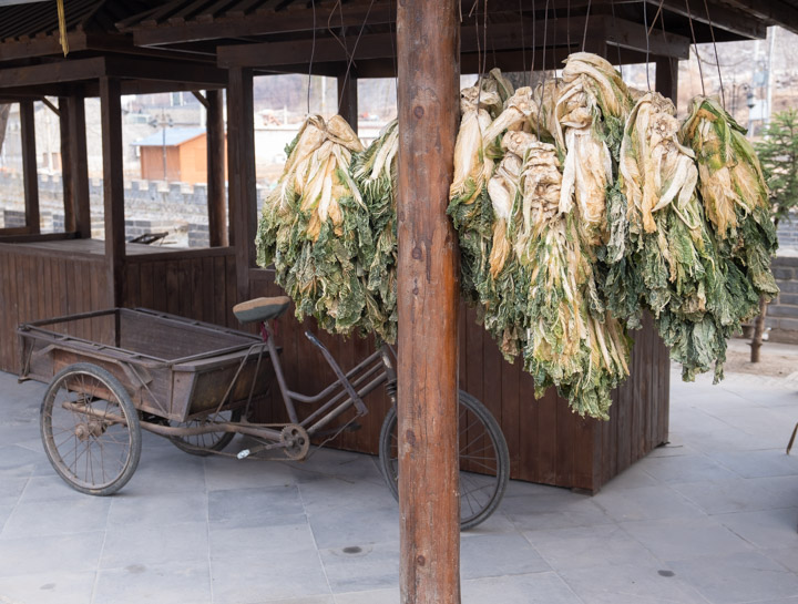 Drying cabbage in Gubeikou