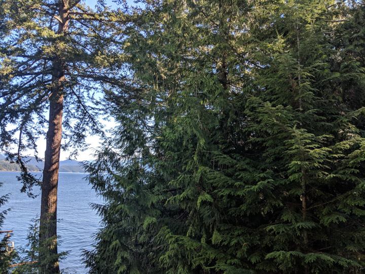 Trees on Keats Island in Howe Sound