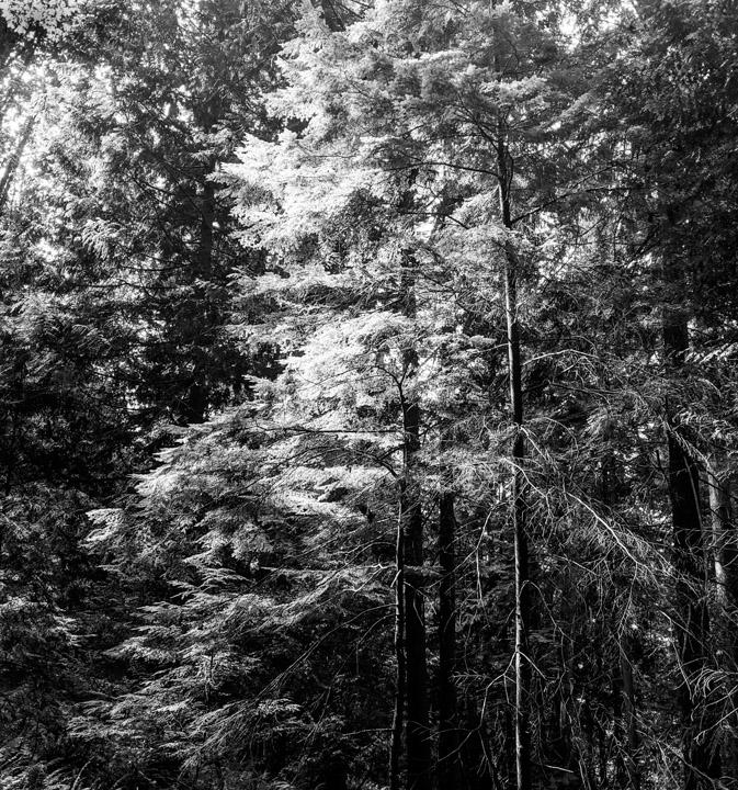 Keats Island forest
