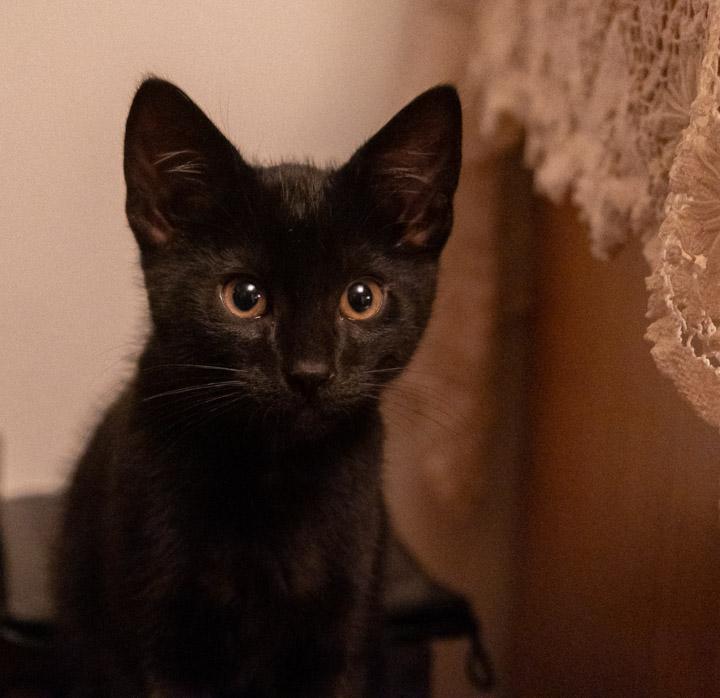 þ the kitten