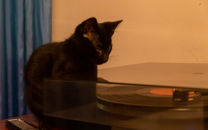 þ the kitten and a record player