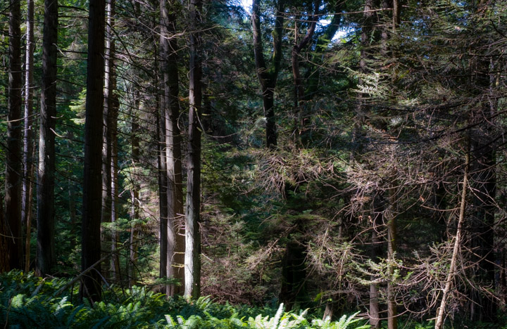 Forest on Keats Island